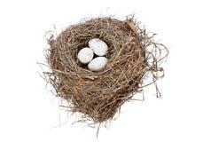 Jerarquía y huevos aislados del pájaro Fotografía de archivo