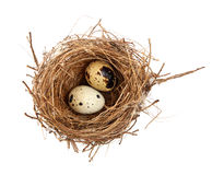 Jerarquía y huevos del pájaro Fotografía de archivo