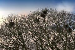 Jerarquías de los pájaros Imagen de archivo libre de regalías