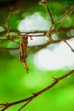 Jerarquías del insecto Fotografía de archivo libre de regalías