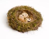 Jerarquía con los huevos Fotos de archivo
