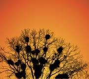 Jerarquías de grajos en las ramificaciones de árbol en la puesta del sol. Fotografía de archivo libre de regalías