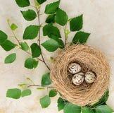 Jerarquice con huevos de codornices y una ramita del abedul en un fondo de mármol Imagen de archivo libre de regalías