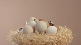 Jerarquice con un diferente tipo de huevos que ruedan en él eje del ` s almacen de video