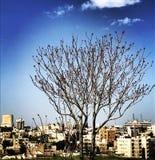Jerash Zdjęcie Stock