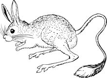 Jerboa. This image is a vector illustration and can be scaled to any size without loss of resolution, can be variated and used for different compositions. This Stock Image