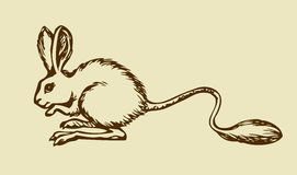 Jerboa. Vector drawing Stock Photo