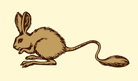 Jerboa. Vector drawing. Cute Dipodinae mice Jaculus  on white background. Freehand outline ink hand drawn picture symbol sketchy in art retro scribble style pen Stock Image