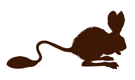 Jerboa. Vector drawing. Dipodinae mice Jaculus  on white background .Black ink hand drawn picture symbol sketchy in art retro style pen on paper. Closeup side Stock Images
