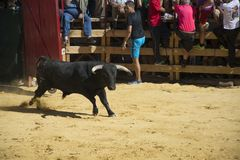 Jerez immagini stock