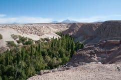 Jerez oasis, Toconao (Chile) Stock Photo