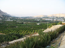 Jericho. View of Jericho in Palestine Royalty Free Stock Photo