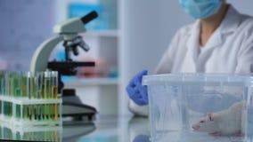 Jeringuilla de relleno experta química con el líquido de la ampolla, prueba de la medicina en animales metrajes