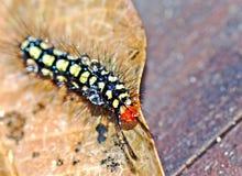 Jerking caterpillar Royalty Free Stock Photos