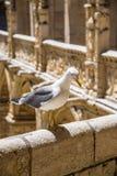 Jeronimos kloster i Lissabon, Portugal Royaltyfri Foto
