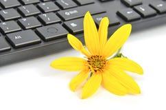 Jerozolimskiego karczocha kwiaty zdjęcie stock