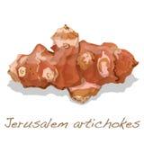 Jerozolimskiego karczocha wektor royalty ilustracja