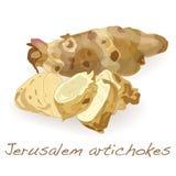 Jerozolimskiego karczocha wektor ilustracja wektor