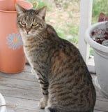 Jerry. Tabby cat outdoors kitty Royalty Free Stock Image