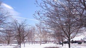 JERSEY CITY, NEW-JERSEY, EUA - 22 DE MARÇO DE 2018: ramos de árvores de madeira secas no tempo de mola Campo coberto com a neve fotos de stock