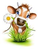 Jersey ko i gräs royaltyfri illustrationer