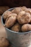 Jersey kungliga nya potatisar fotografering för bildbyråer