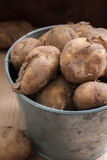 Jersey Royal New Potatoes. A popular new season potato from the island of Jersey Stock Image