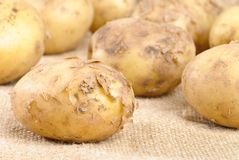Jersey Royal Potatoes Royalty Free Stock Photo