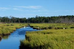 Jersey Shore Marshes and Wetlands. Landscapes of wetlands at Cattus Island Park in Toms River, New Jersey Stock Images