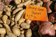 Jersey Sweet Potatoes Royalty Free Stock Photo