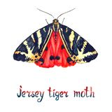 Jersey tiger moth, hand painted watercolor illustration royalty free stock image