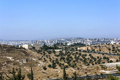 Jerusalém Olive Tree Field e março Elias Monastery fotografia de stock