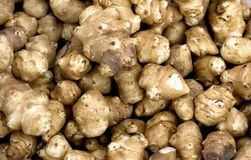 Free Jerusalem Artichoke Royalty Free Stock Images - 12923939