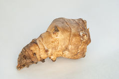 Jerusalem artichoke Royalty Free Stock Images