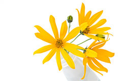Jerusalem artichoke flowers Royalty Free Stock Images