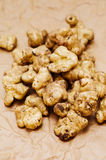 Jerusalem artichoke- Helianthus tuberosus Stock Photos