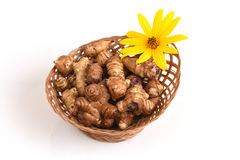 Jerusalem artichoke or sunchoke, heads and flowers. Stock Image