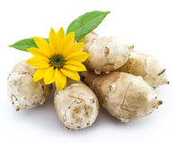 Jerusalem artichoke. Stock Photo
