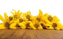 Jerusalem artichoke. Yellow topinambur flowers. Stock Images