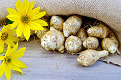 Jerusalem artichokes with burlap and flowers Stock Photography