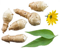 Jerusalem artichokes, flower and leaf. File contains clipping paths Stock Photography