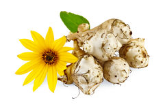 Jerusalem artichokes with yellow flower Stock Photos