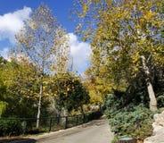 Jerusalem biblical zoo. Beautiful autumn trail Stock Photos