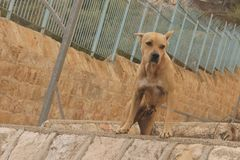 Jerusalem - Cemetery Dog stock photo