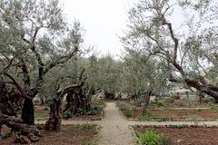 Jerusalem, Israel. - February 15.2017. Gethsemane garden. The place of Jesus Christ`s praying on the night of the arrest. Jerusalem, Israel. - February 15.2017 Royalty Free Stock Photos