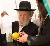 Elderly ortodox Jew is checking etrog. JERUSALEM, ISRAEL - OKTOBER 16, 2016: Elderly ortodox Jew with grey beard in black hat is checking ritual plant citrus Stock Photography