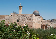 Jerusalem, Old City, Israel, Middle East, mosque, Al Aqsa Mosque, islam, minaret, Temple Mount, ruins, skyline, cityscape. A rose garden and view of Al Aqsa Royalty Free Stock Image