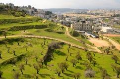 jerusalem olive trees Royaltyfria Bilder