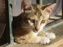 Jerusalem Street Kitten. A little street cat in Jerusalem finds shelter Stock Photo
