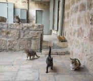 Jerusalem-streunende Katzen lizenzfreie stockfotos